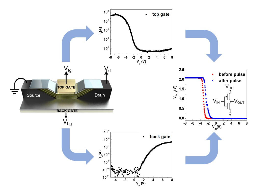圖一:採用MoS2通道呈現極性可控且Vth可調整的場效電晶體