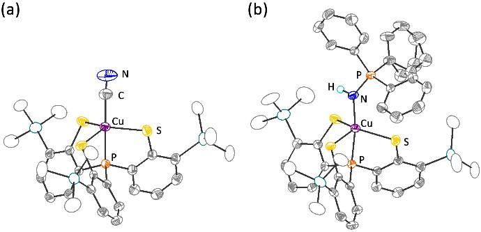 圖二:三價銅錯合物[Cu(TMSPS3)(CN)]− (a)、Cu(TMSPS3)(HN=PPh3) (b)之結構圖